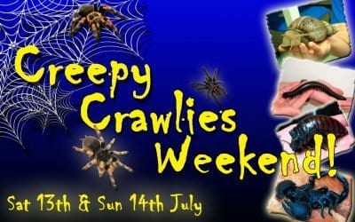 Drusillas Park- Creepy Crawlies Weekend