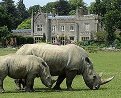 Cotswold wildlife park – Junior Keeper Experience